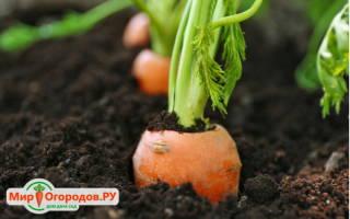 Сеялка для моркови своими руками из шприца