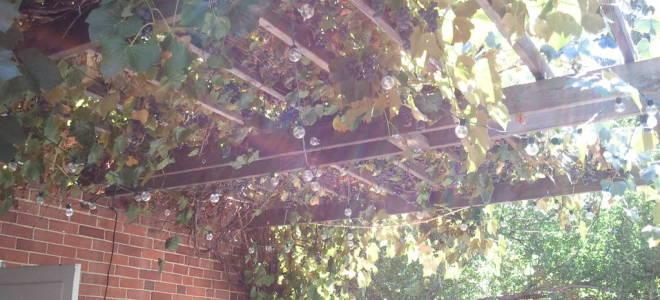 Приспособление для отжима винограда